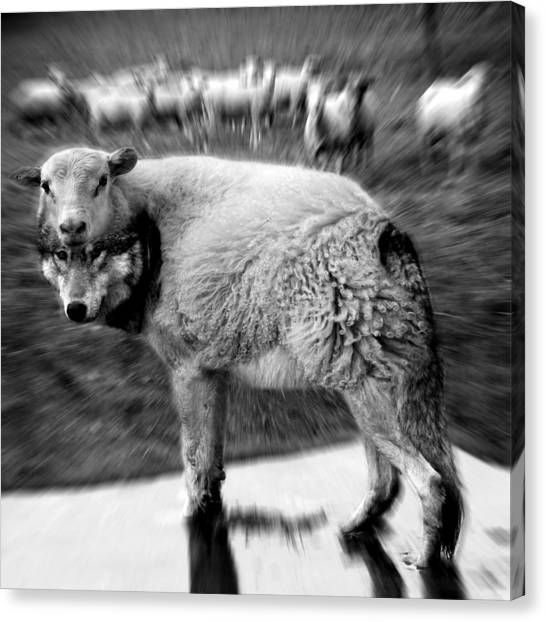 The Flock Is Safe Grayscale Canvas Print