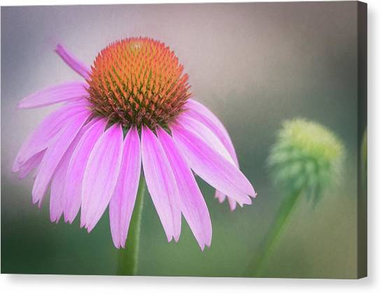 The Flower At Mattamuskeet Canvas Print