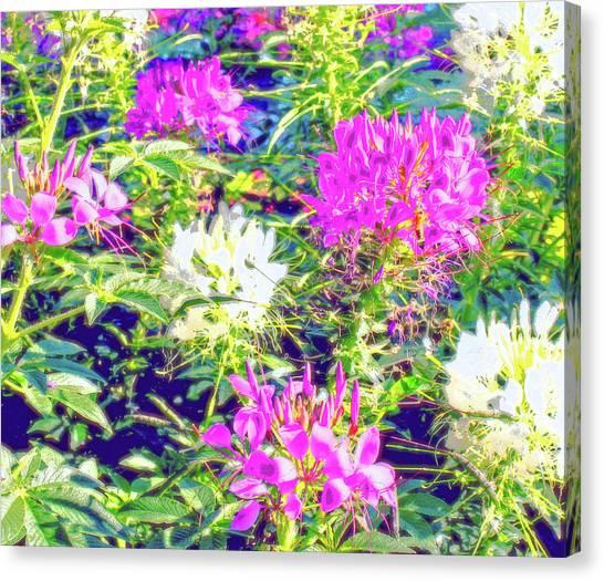 University Of Colorado Canvas Print - The Flower Garden  by Jane Merrit