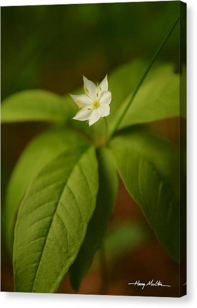 The Flower Of The Dark Woods Canvas Print