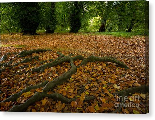 Autumn Leaves Canvas Print - The Forest Floor by Smart Aviation