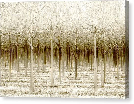 Forest Canvas Print - The Forest For The Trees by Holly Kempe