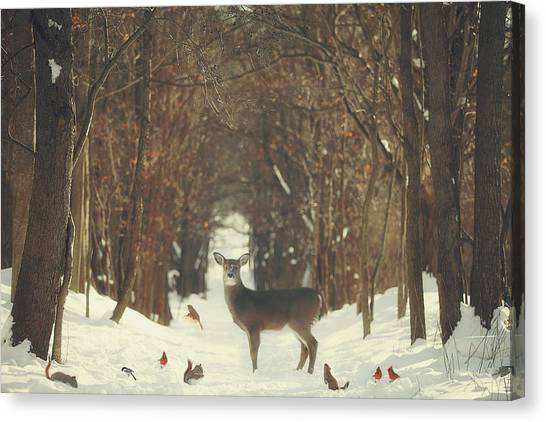 Deer Canvas Print - The Forest Of Snow White by Carrie Ann Grippo-Pike