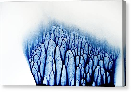 Canvas Print - The Forest Tells A Story by Claire Desjardins