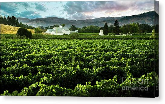 Sonoma Valley Canvas Print - The Gamble Vineyard by Jon Neidert