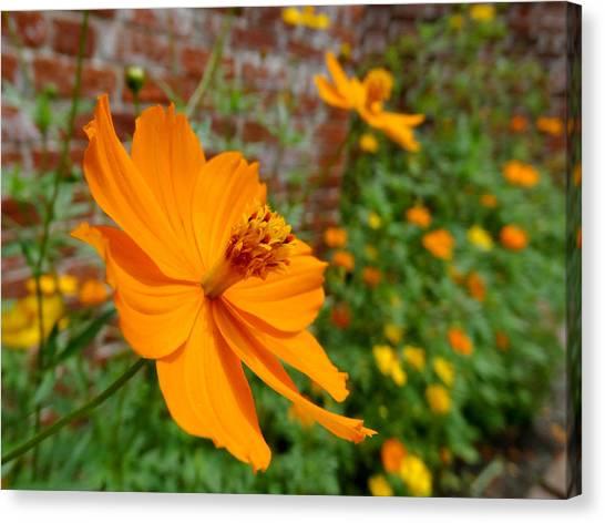 Cosmos Flower Canvas Print - The Garden Orange Cosmos Flower by Mike McGlothlen
