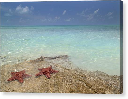 Carribbean Canvas Print - The Gate Keepers by Betsy Knapp