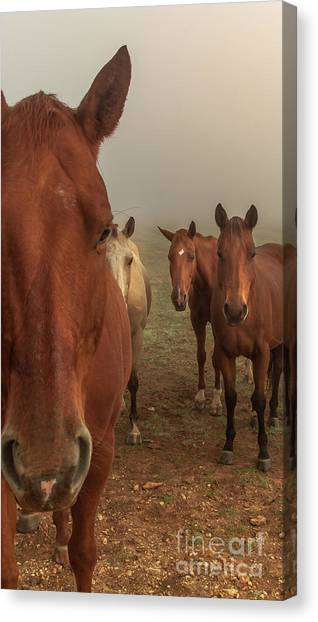 Colorado Cowgirl Canvas Print - The Gauntlet - Horses by Robert Frederick