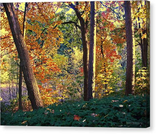 Forest Paths Canvas Print - The Golden Time by Garth Glazier