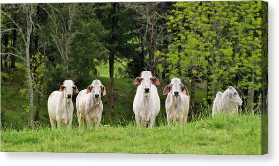 The Grass Is Always Green On The Other Side Of The Fence Canvas Print
