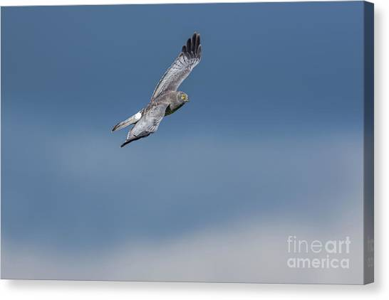 Canvas Print featuring the photograph The Gray Ghost by Craig Leaper