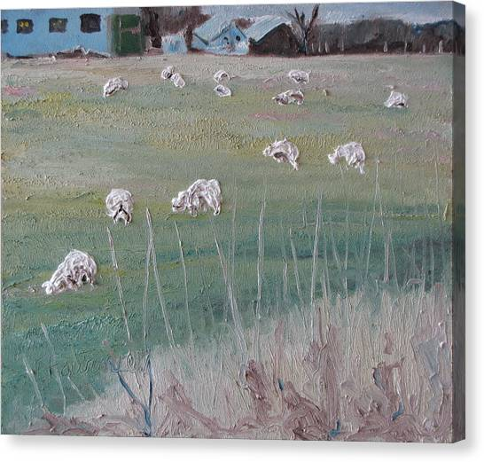 The Grazing Sheep Canvas Print by Francois Fournier