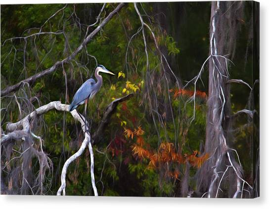 Great Cypress Canvas Print - The Great Blue Heron by Lana Trussell