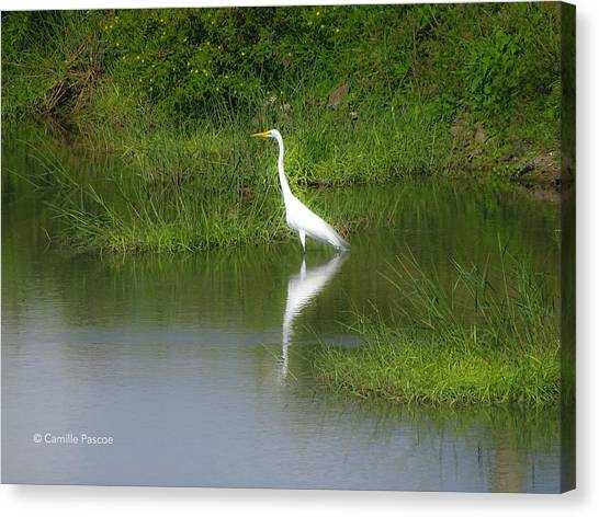 Great Egret By The Waters Edge Canvas Print