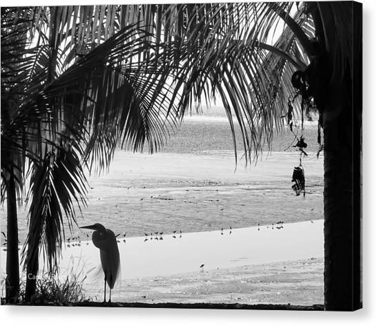 Watching The Tide Canvas Print