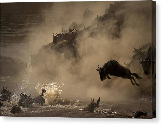 Kenyan Canvas Print - The Great Wildebeest Migration by Adrian Wray