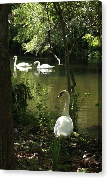 The Guard Swan Canvas Print