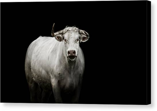 Farm Animals Canvas Print - The Guardian by Paul Neville
