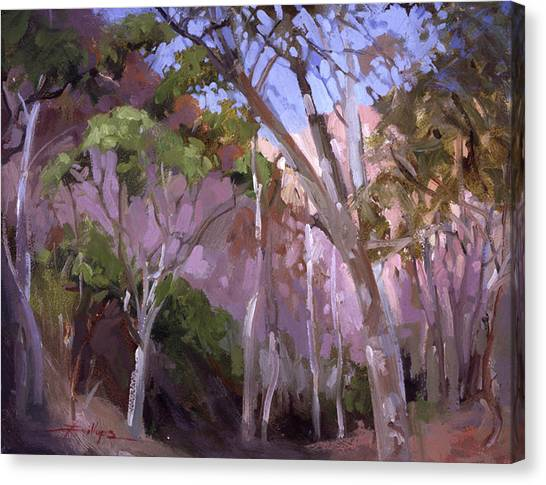 The Gum Grove Catalina Canvas Print