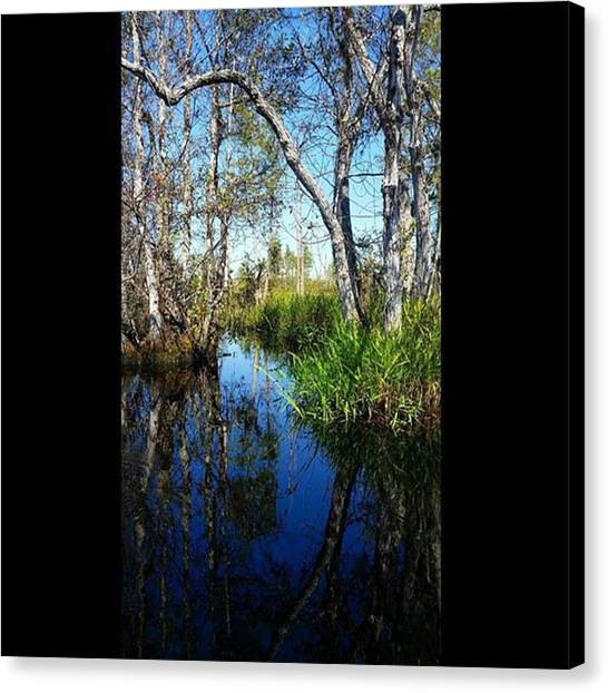 Okefenokee Canvas Print - The Hauntingly Beautiful Swamp In by Karen Breeze