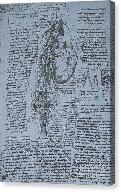 Pen And Ink Drawing Canvas Print - The Heart And The Bronchial Arteries by Leonardo Da Vinci