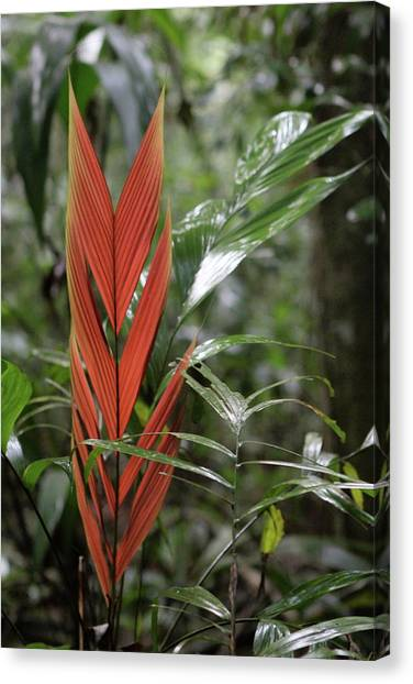 The Heart Of The Amazon Canvas Print