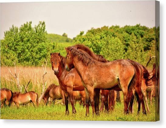 The Herd 2 Canvas Print