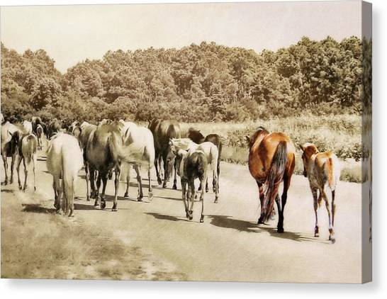 The Herd Canvas Print by JAMART Photography