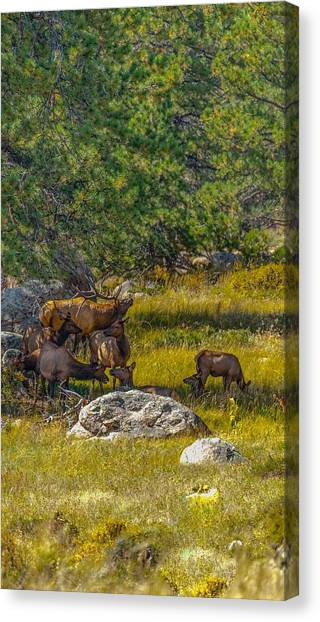 The Herd Keeper Canvas Print