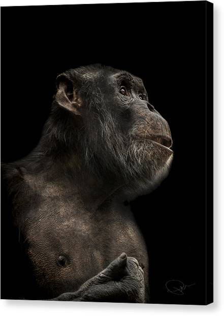 Ape Canvas Print - The Hitchhiker by Paul Neville