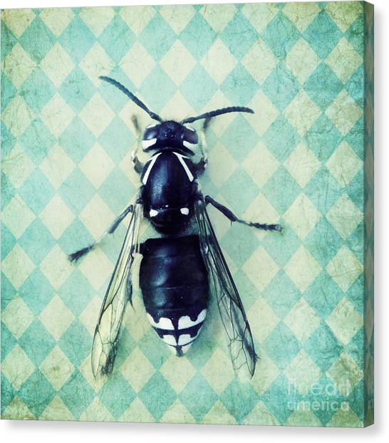 Wasp.insect Canvas Print - The Hornet by Priska Wettstein