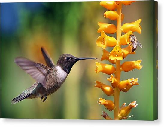 The Hummingbird And The Bee Canvas Print