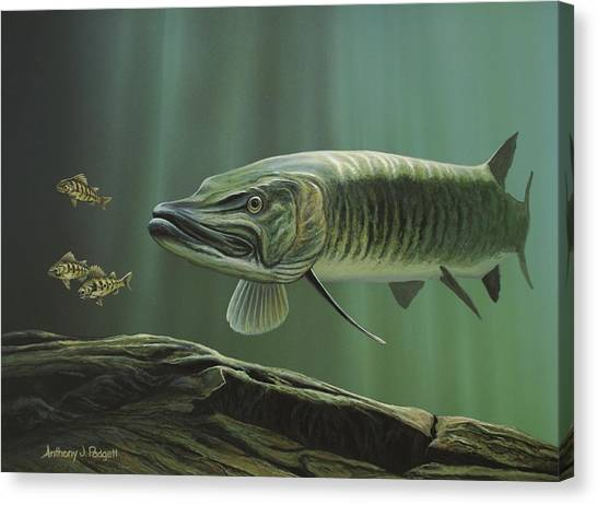 The Hunter - Musky Canvas Print