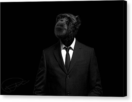Monkeys Canvas Print - The Interview by Paul Neville