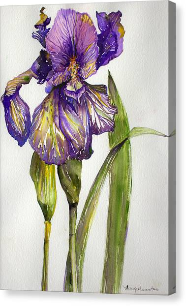 Canvas Print - The Iris by Mindy Newman