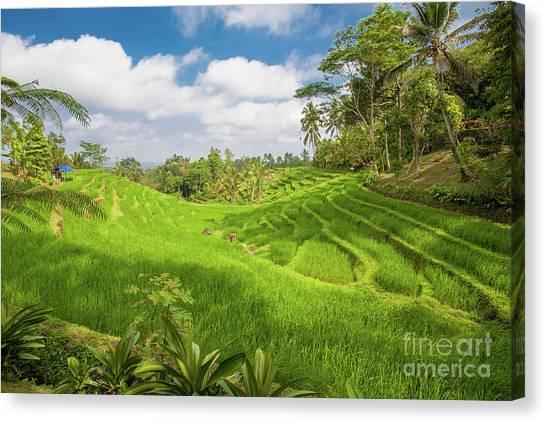 The Island Of God #14 Canvas Print