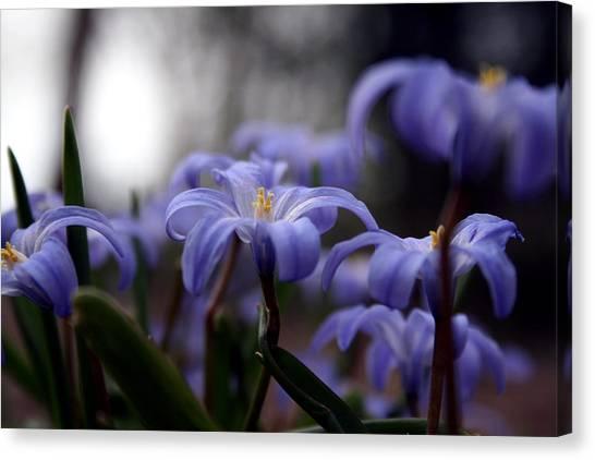 The Joy Of Springtime Canvas Print