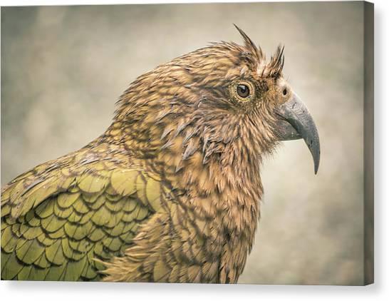 The Kea Canvas Print