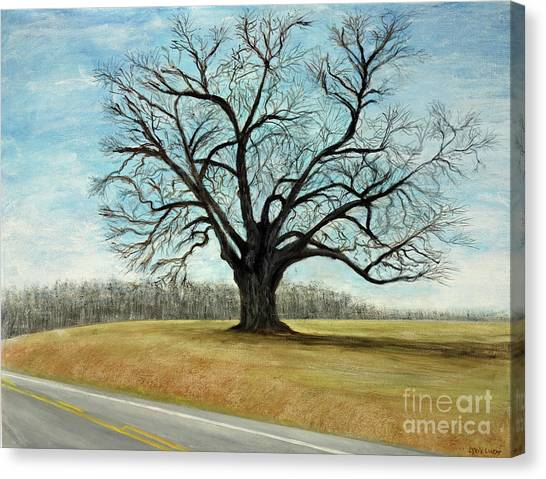 The Keeler Oak Canvas Print