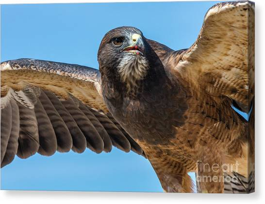 The Kill Wildlife Art By Kaylyn Franks Canvas Print