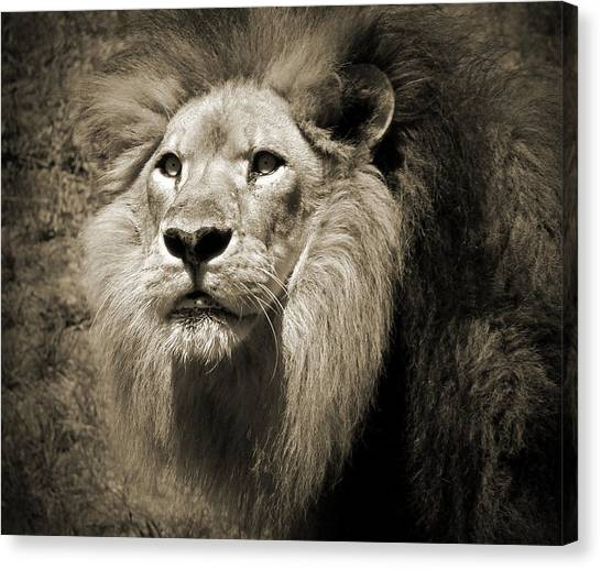 The King II Canvas Print