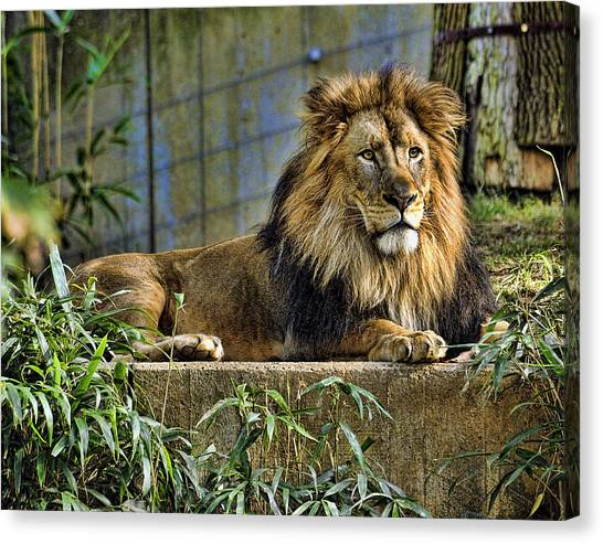 The King Canvas Print by Keith Lovejoy