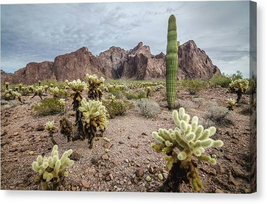 Canvas Print featuring the photograph The King Of Arizona National Wildlife Refuge by Margaret Pitcher