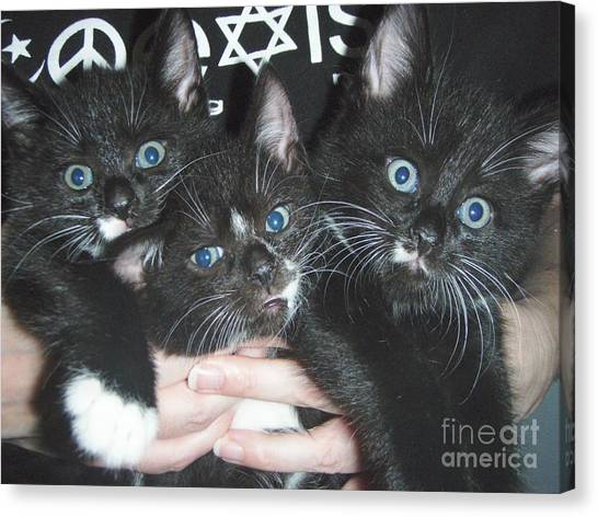 The Kittidiots Canvas Print