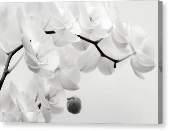 The Last Orchid Canvas Print
