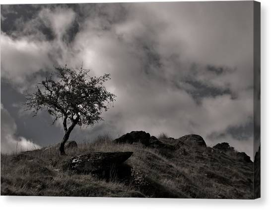 The Last Tree Canvas Print by Sean Wareing