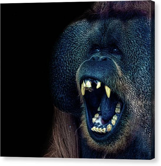 Orangutan Canvas Print - The Laughing Orangutan by Martin Newman