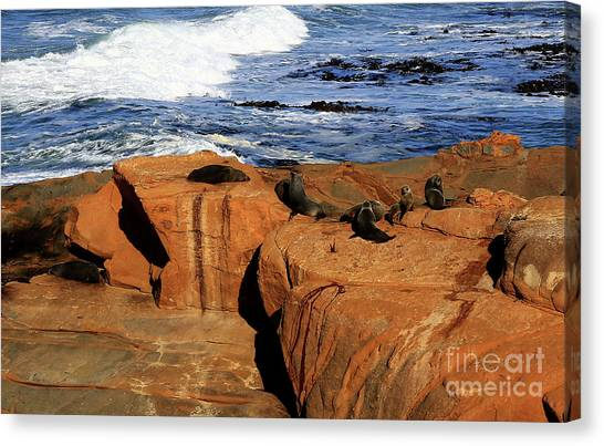 The Lazy Lounging Seals Canvas Print