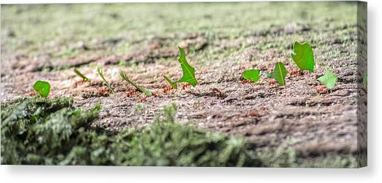 Ants Canvas Print - The Leaf Parade  by Betsy Knapp