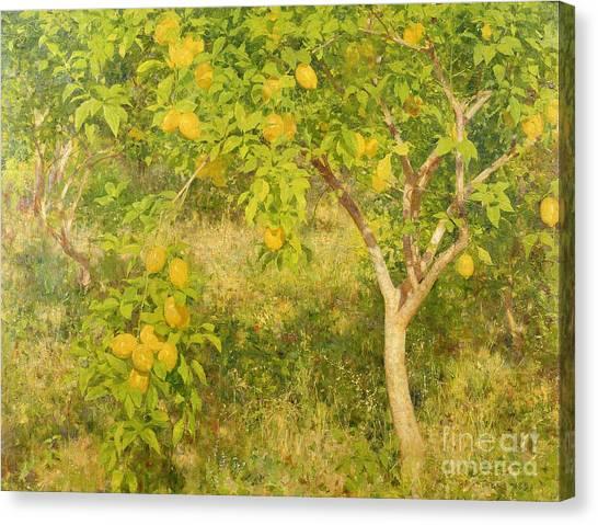 Fruit Trees Canvas Print - The Lemon Tree by Henry Scott Tuke